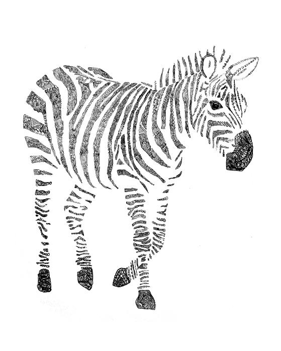 8x10 zebra