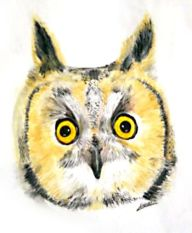 watercolour owl