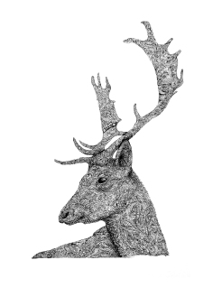 zentangle Stag Head