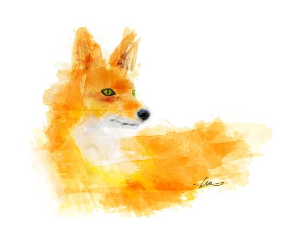 fox pics 40 x 50 cmLR.jpg