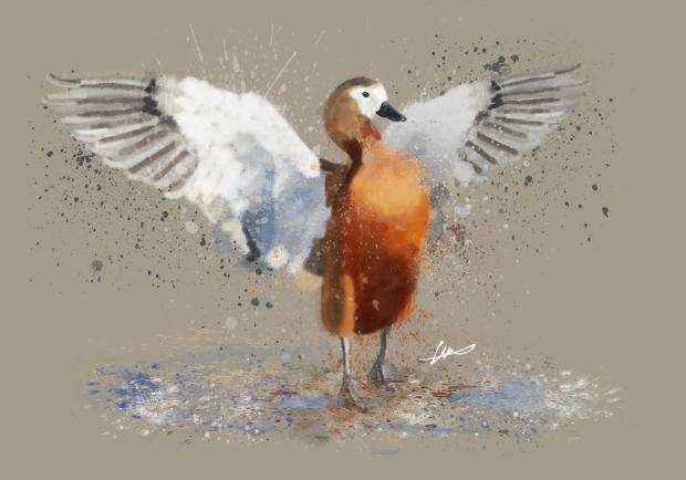 duck 1 LR.jpg