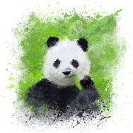 panda-lr